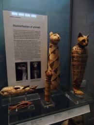 Mummified animals