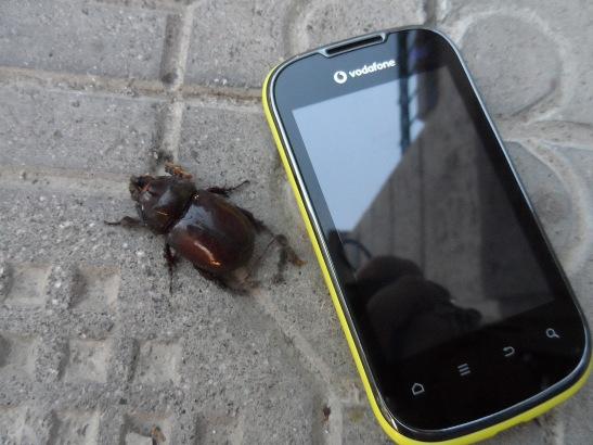 Huge beetle!